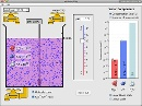 Screenshot of the simulation pH Scale